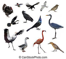 Wild Birds Collection On White Background