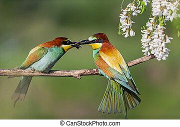 wild birds during spring courtship , unique footage