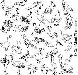 Wild birds. Zoo. Set. Hand-drawn. Vector illustration....