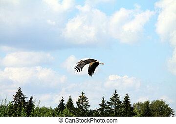 wild birds - Wild bird in a natural habitat