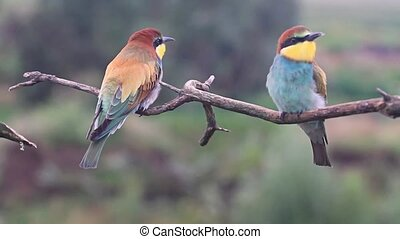 wild birds with colored feathers on a summer day , wildlife and beautiful colors