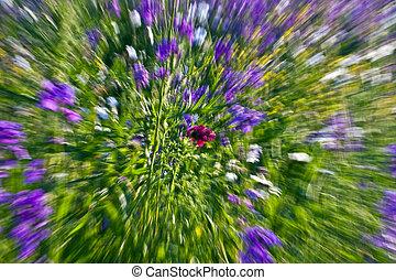 wild blooming flowers in meadow