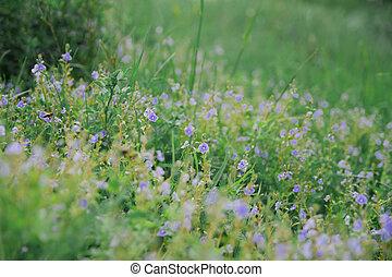 Wild blue flowers on a meadow in summer