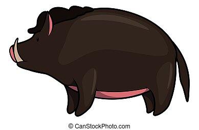 Wild boar baby