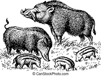 Wild boar family on the grass