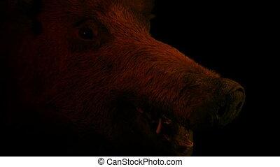 Wild Boar Head In Dark Room Lit Up With Fire