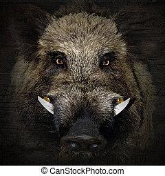 boar portrait - wild boar portrait in black background