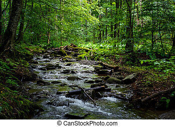 wild brook in the dark forest. lovely and fresh nature...
