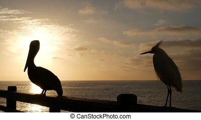 Wild pelican on wooden pier railing, Oceanside boardwalk, California ocean beach, USA wildlife. Big pelecanus, sea water. Egret bird in freedom close up, contrast silhouette at sunset. Large bill beak
