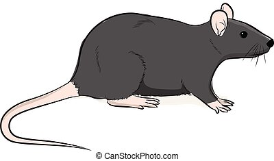 Wild Brown Rat Vector Illustration