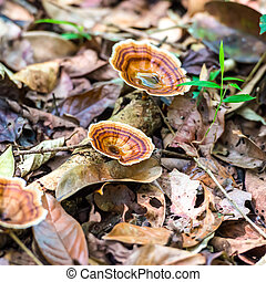 Wild Brown striped mushrooms growing in a forest, closeup