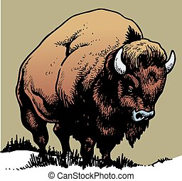wild bull isolated on the white background