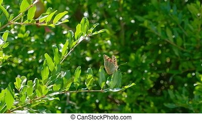 Wild butterfly sitting on a branch. - Wild butterfly sitting...