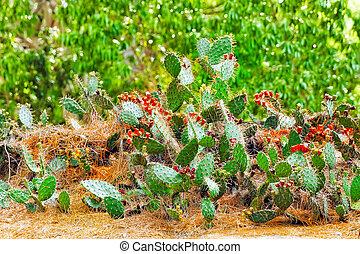 Wild cactus flowers.