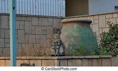 Wild cat sitting on the stone wall at the street