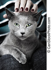 Wild cat - Wild dangerous cat sitting on the human knees and...