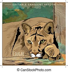 Wild Cats. Cougar - Wild cats in the habitat. Lazy cougar