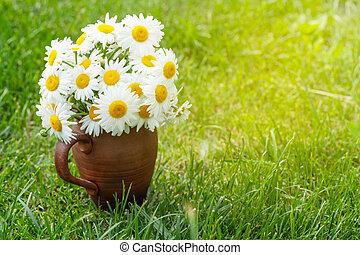 Wild chamomile bouquet
