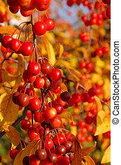 wild cherry in fall 01