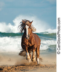 Wild chesnut draft horse running by the sea - Wild chesnut...