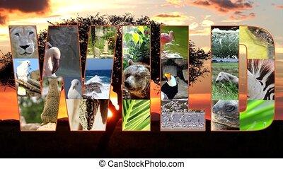 wild collage