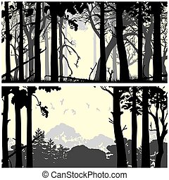 Wild coniferous forest - Panorama of wild coniferous forest...