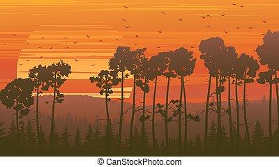 Wild coniferous wood at sunset. - Horizontal orange...