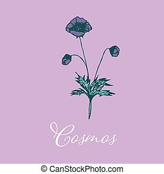 Wild Cosmos flower design isolated object