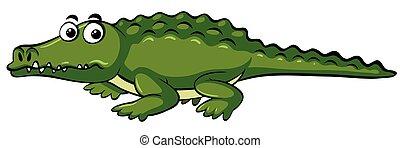 Wild crocodile on white background