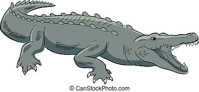 Wild Crocodile Vector Illustration