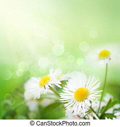 Wild daisies - Fresh wildflowers spring or summer design. ...