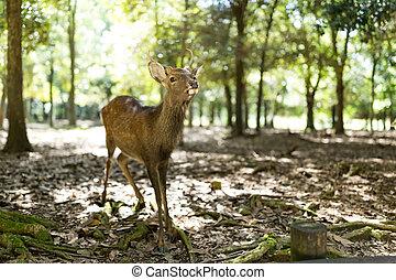 Wild deer in Nara park with sunlgiht