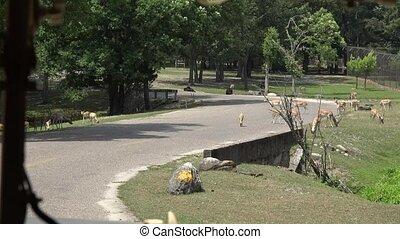 Wild Deer in Park