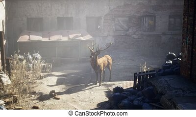 Wild deer rooming around the streets in abandoned city