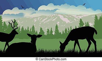 wild, deers, landscape, natuur