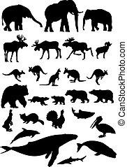 wild djur, kollektion