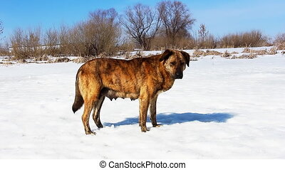 Wild dog standing on the snow