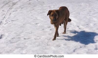 Wild dog walking on snow