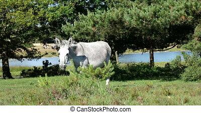 Wild donkey horse walking on a green field - Free wild white...