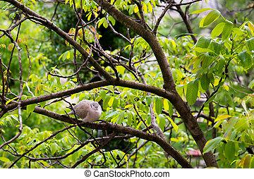 Wild dove on the tree