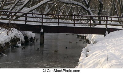 Wild ducks look for food in the snow winter river.