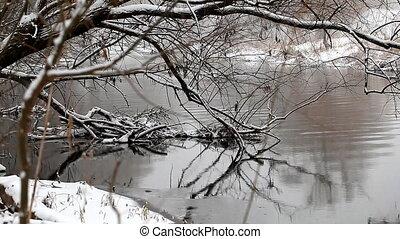 wild ducks swim in the winter pond
