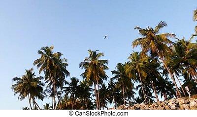wild eagle flies high in the blue sky over the beach
