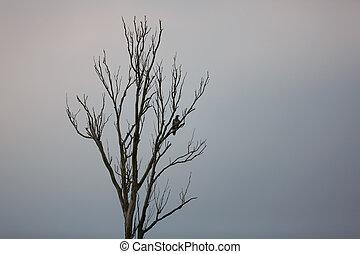 Wild eagle on a tree