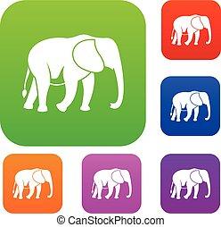 Wild elephant set collection