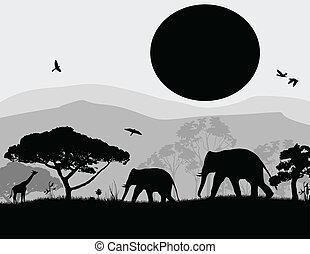 Wild elephants and giraffe at sunset