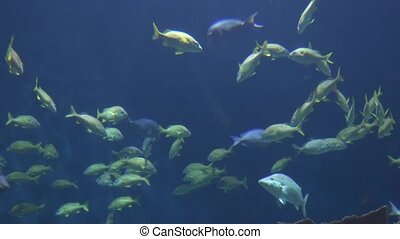 Wild Fish In Water