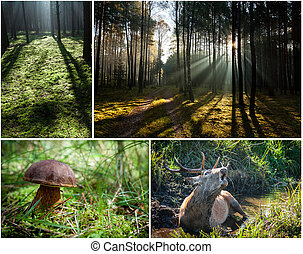 Wild flora and fauna in the forest