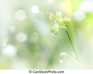 Wild flower and grass with water drop in the morning. Spring and summer natural background.