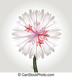 wild flower - vector illustration of a cornflower,...